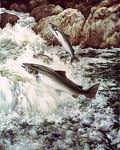 The Inconvenient Truth About Wild Salmon