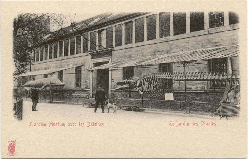 Moby Dick visits Paris - Enlarge Me Vintage Postcards