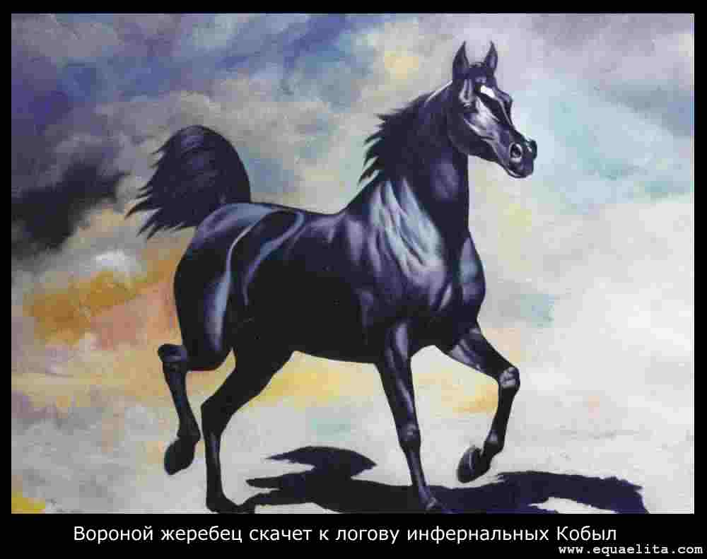Черная арабская лошадь