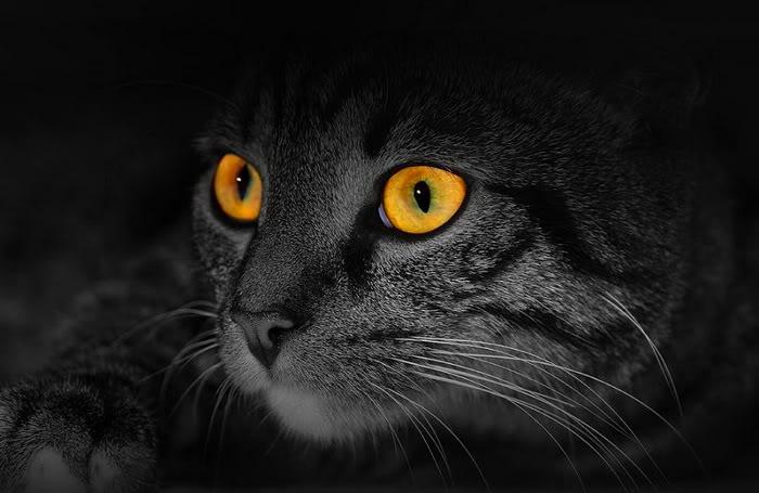 awesome cat eye20 22