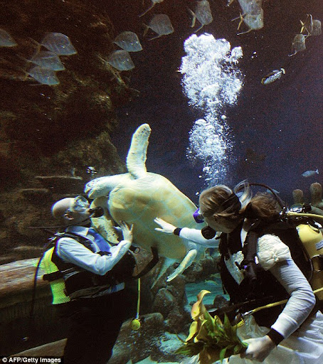 underwater wedding irritates turtle