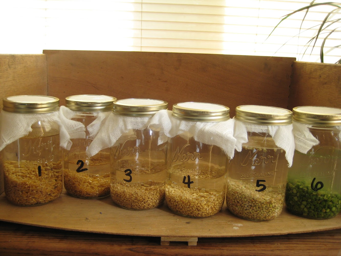 Sprouting Grains 101