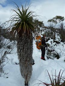 Plante inconnue dans la neige
