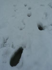 Sous la neige... l'eau !