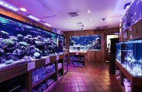 Tropical Fish Store «House of Fins», reviews and photos, 99 Bruce Park Ave, Greenwich, CT 06830, USA