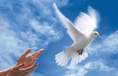 Thơ hay về nỗi đau chiến tranh và ước mơ hòa bình