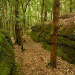 Moss Wall near the Board House Dam in the Watagans (322745)