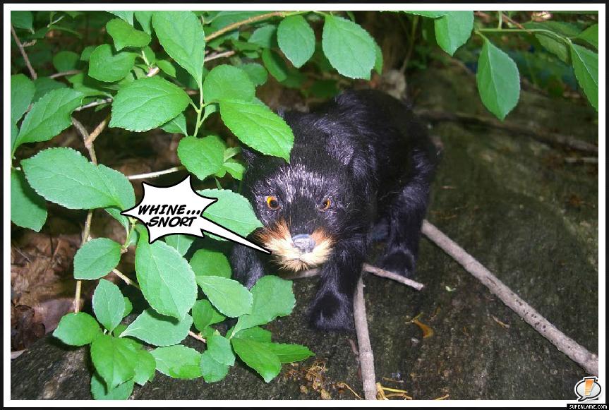 Black Forest Bear MySuperLamePic_fd6d8e9f080ff2fce3f479e916c35e95