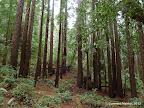 Jackson Flats Trail