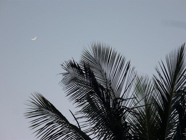 Mondsichel hinter Palme