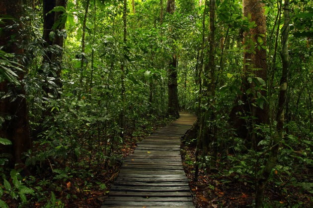 Jungle Trail leading to Sabang underground river, Philippines