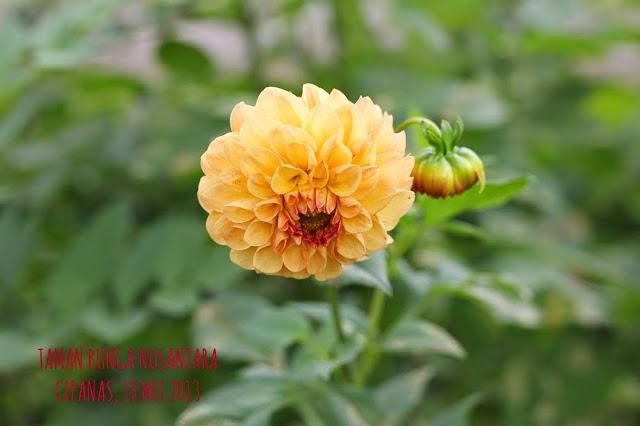Taman Bunga Cipanas Cianjur