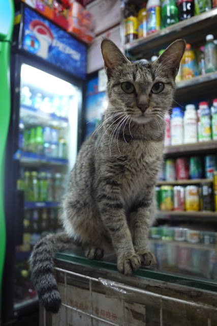 cat with bottled and canned drinks in the background