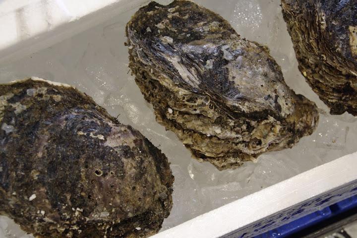 写真:岩牡蠣