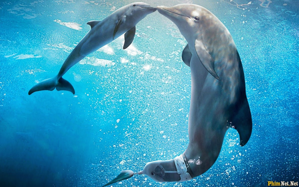 Xem Phim Câu Chuyện Cá Heo 2 - Dolphin Tale 2 - Wallpaper Full HD - Hình nền lớn