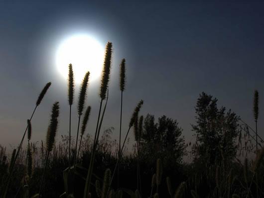 Ảnh ánh trăng quê