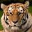 Caz M avatar image