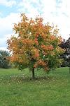 Jesień ... piękna Polska Jesień