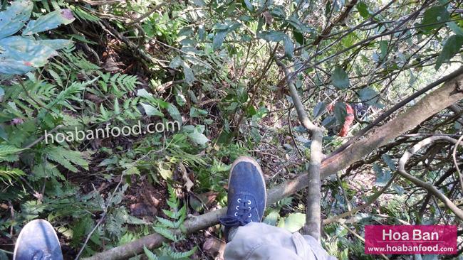 đi tìm mật ong rừng 04/2013 - 10