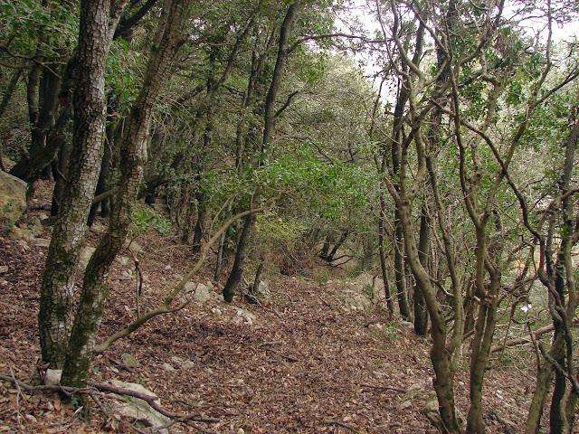 senderismo - Catí - Tossal de la Nevera - L'Avellà PR-CV 410
