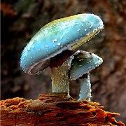 К чему видеть грибы во сне?