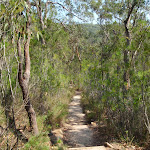 Rainforest track (118759)