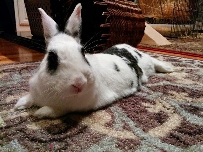 Bunny #1 Bao Bao