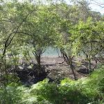 Passing around some mangroves (130498)