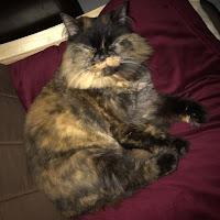 Ayman Raafat's avatar