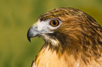 Tamarack Wildlife Rehabilitation Education Center Programs