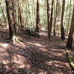 path down to Basin campsite track (58811)