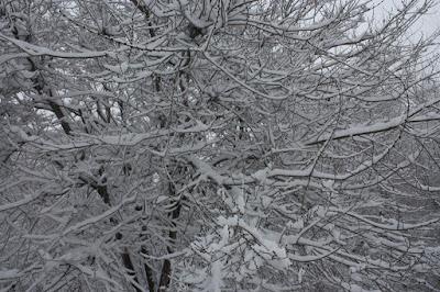 Neve em Frascati