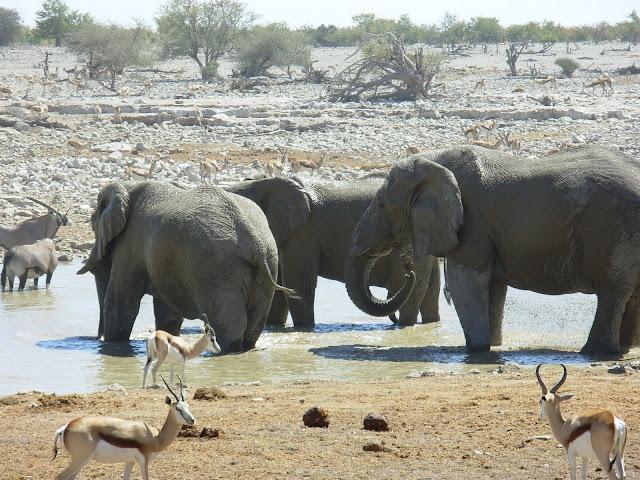 أفضل ما في أفريقيا  Best of Africa Namibia_180807123316