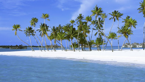 Palm Trees in Paradise, Maldives.jpg
