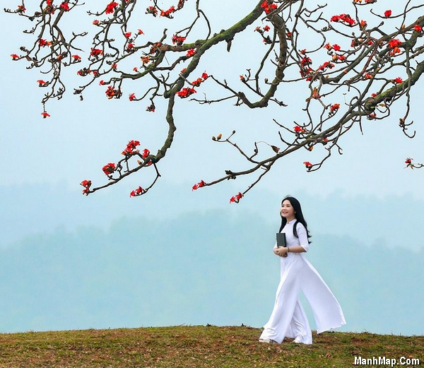 thơ nhớ mùa hoa gạo