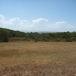 Open grasslands on an elevated area of Green Point Reserve (402880)