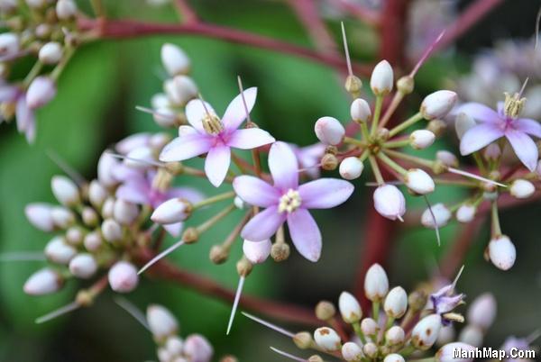 thơ tình hoa xoan