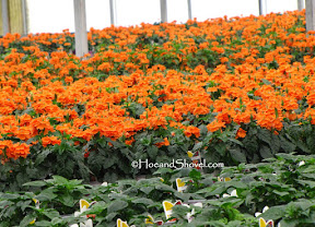 Tour of Riverview Flower Farms
