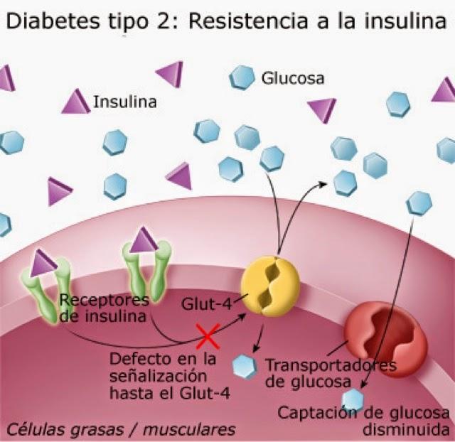 diabetes metabolismo de glucosa citrato