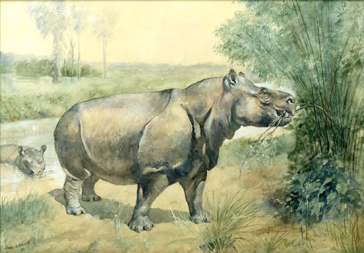 most reconstructions of metamynodon portray it as a hippo like creature