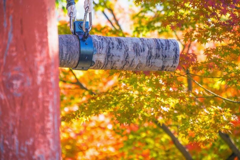京都 紅葉 平等院 写真2