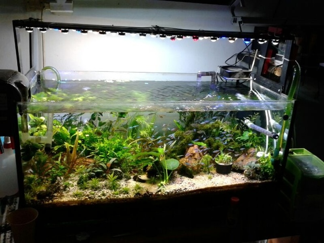 DIY ELECTRONICS PROJECTS: DIY Led Aquarium