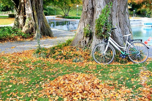 Mùa Thu lá rơi rụng đầy