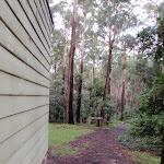 start of sheldon forest track (47933)