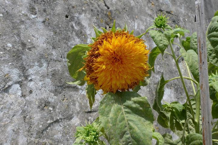 kwiatek nr 2