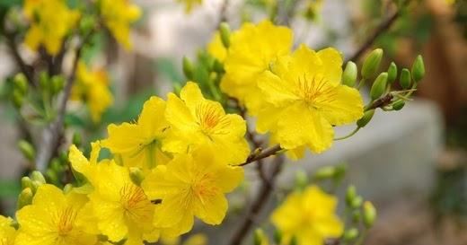 1001 hình ảnh hoa cỏ Mùa Xuân tuyệt đẹp (có thơ ngắn hay)