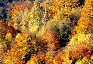 ősz a Feketerezen