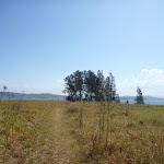 She Oaks beside Green Point Lake Macquarie (403102)