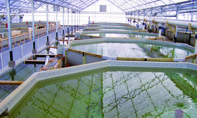 Đơn hàng nuôi trồng thủy sản cần 3 nam thực tập sinh làm việc tại Hokkaido, Nhật Bản tháng 11/2016