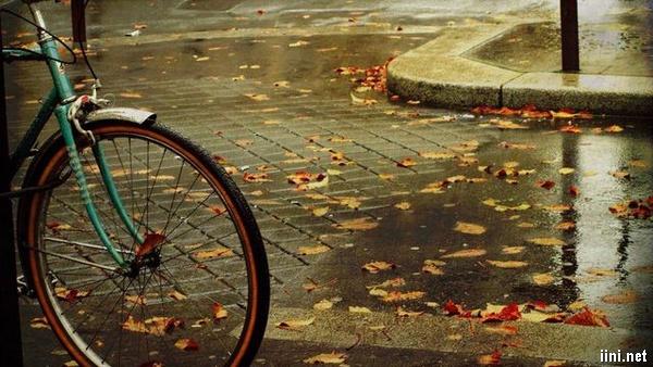 ảnh hoài niệm cơn mưa mùa thu